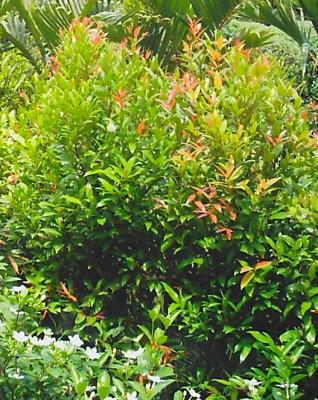26 Beautiful Landscaping Plants Philippines Garden Plants